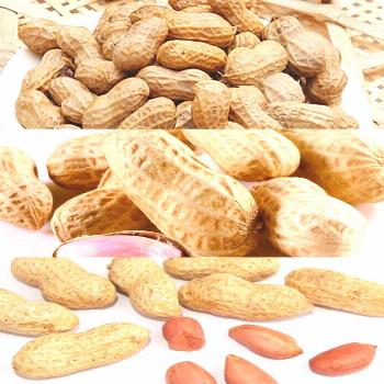 Export Agriculture IQF Vegetable Frozen Brine Boiled Peanuts.