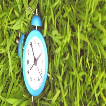 The Best Time to Plant Grass in Pennsylvania | Charlestown Landscaping#charlestown