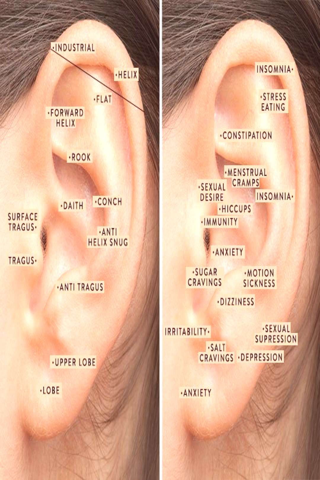 Are Your Trendy Ear Piercings Helping You On A Wellness Level? - Are Your Trendy Ear Piercings Hel