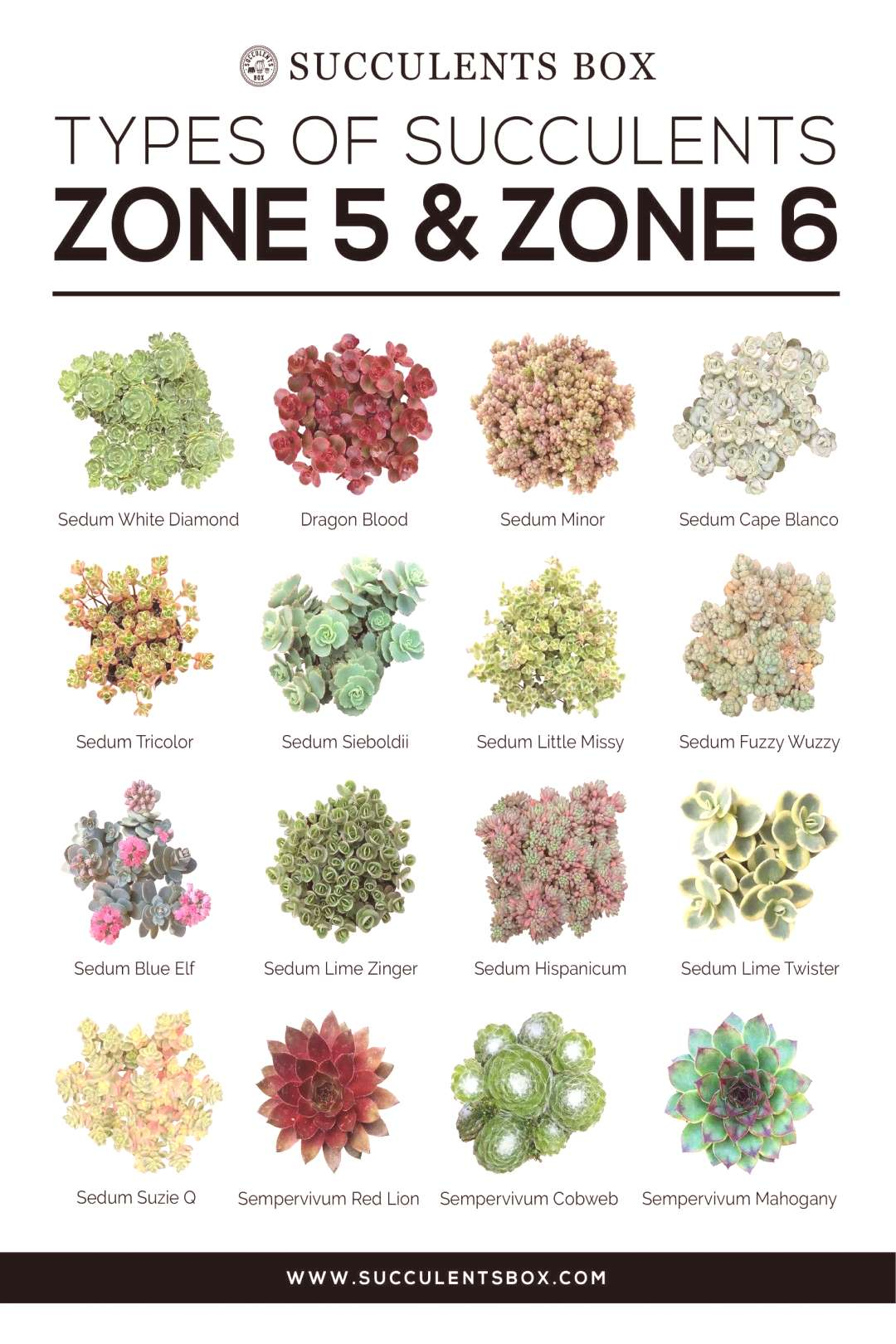 CHOOSING SUCCULENTS FOR ZONE 3, 4, 5 amp 6 - NEW YORK, PENNSYLVANIA, OHIO AND MINNESOTA - Types of S