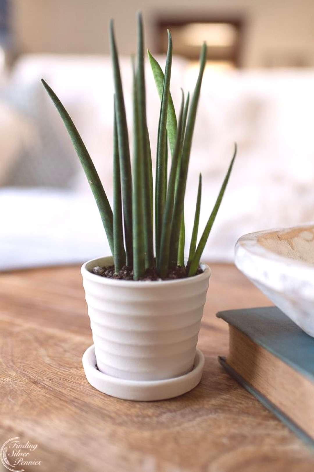 Easy to Care for House Plants - Finding Silver Pennies,