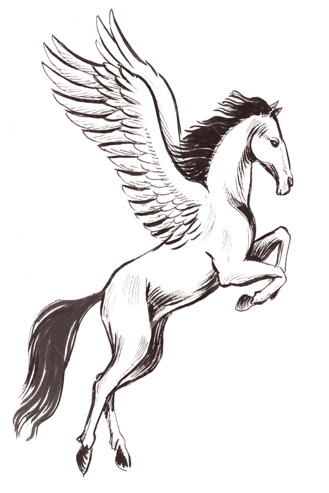 Flying pegasus. Ink black and white illustration ,