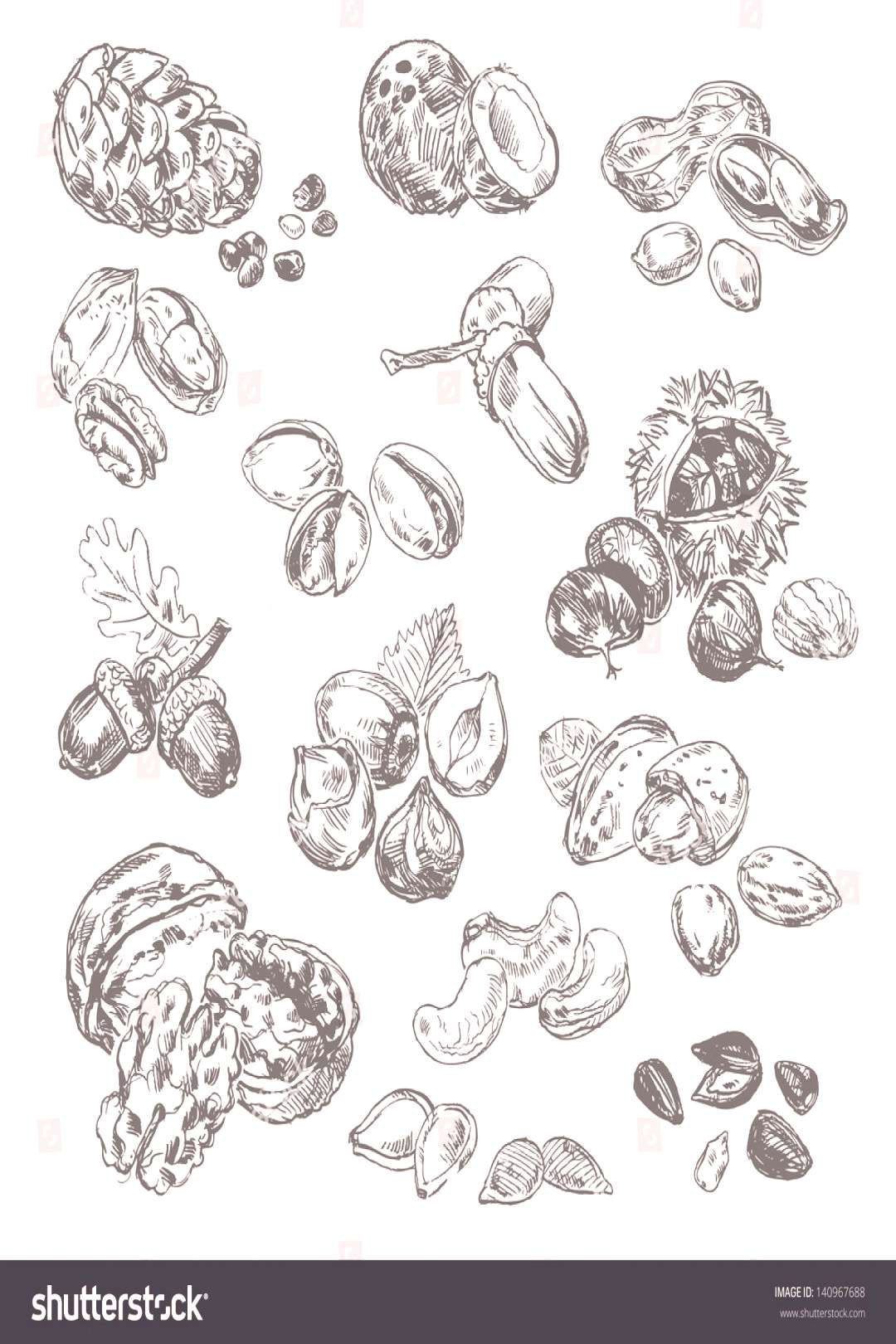 Freehand drawing nuts. Pistachios, cashews, coconut, filbert, peanuts, almonds, acorn, coconut, see