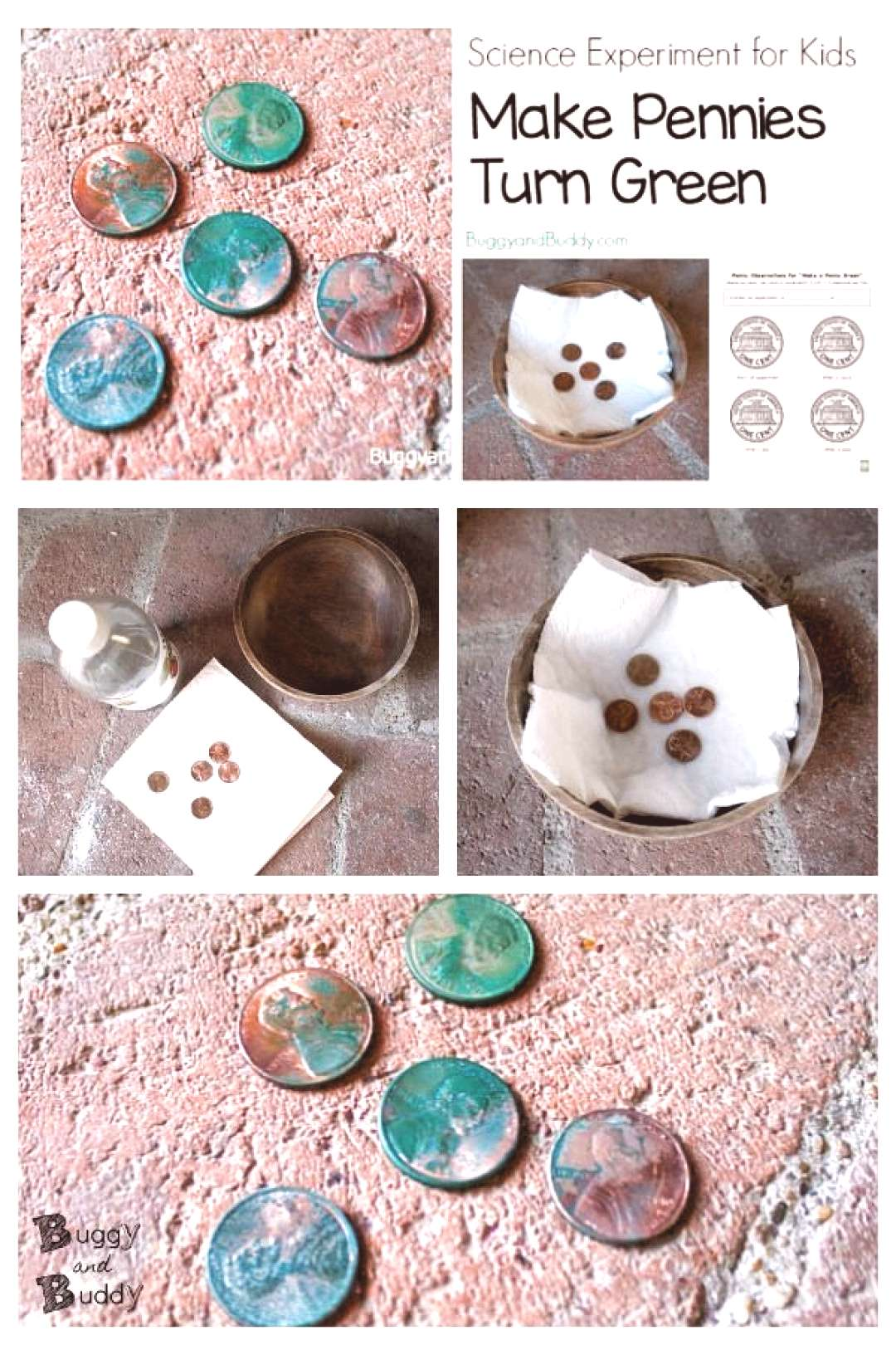 Science Experiment for Kids Explore a chemical reaction by making pennies turn green! A fun scienc