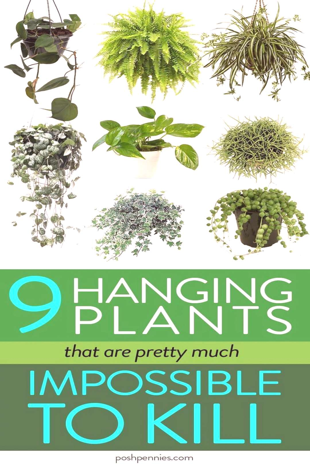 The Best 9 Indoor Hanging Plants Even A Beginner Won't Kill | Posh Pennies From tried-and-true re
