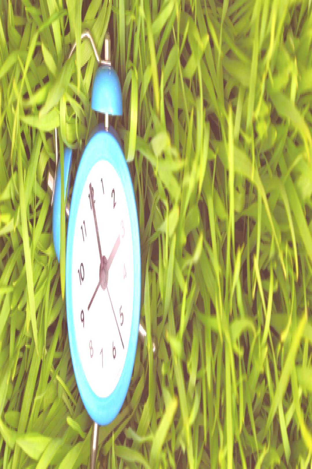 The Best Time to Plant Grass in Pennsylvania | Charlestown Landscaping#ch...