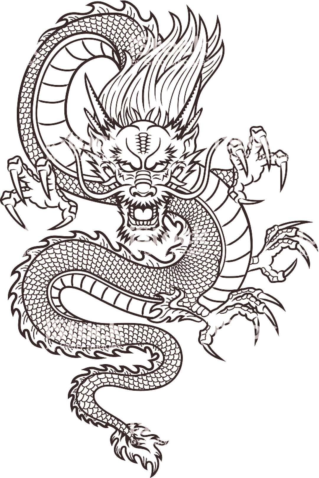 Traditional Asian Dragon. This is vector illustration ideal for a ... - Chinese dragon royalty fre